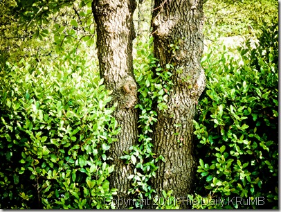 two_trees_and_bushes